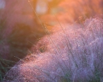 Morning Sun by Mark Mittleman