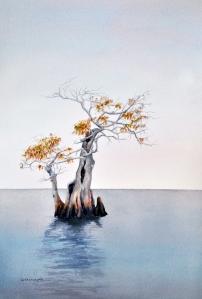 Cypress no. 1 lo res