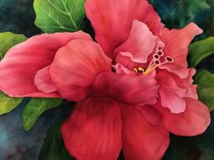 Garden hibiscus Dorothy Koliba